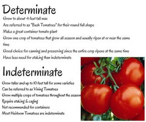 Determinate vs Indeterminate
