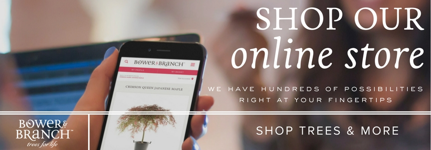 Shop our online store