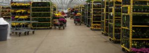 Good Neighbor Day October 8, 2020 @ Wenke Greenhouses Retail Store | Kalamazoo | MI | US